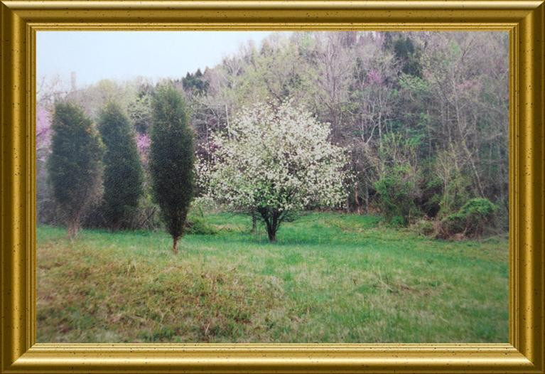 274 acres Hwy 57 Concord KY
